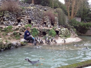 What's on mama's mind - pinguins Burgers Zoo