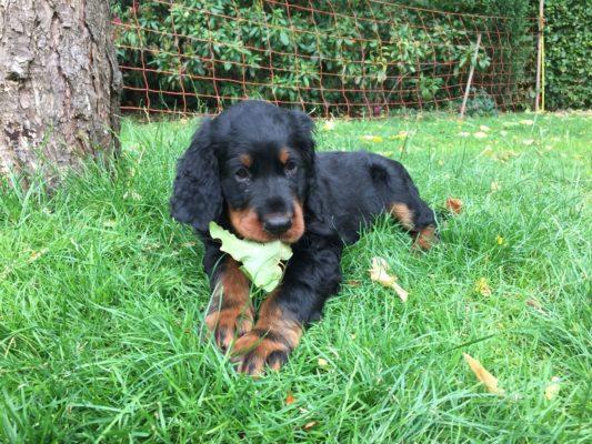 puppy juli bulbby