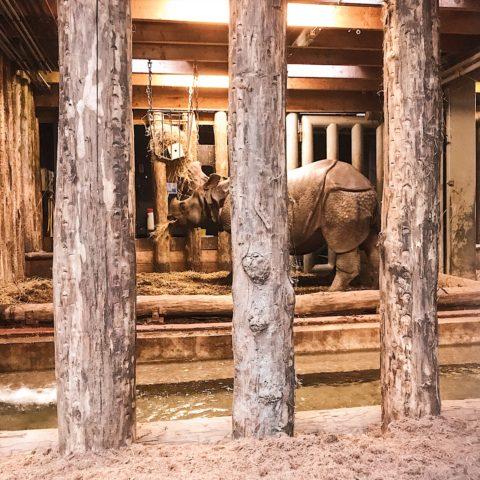 Dierenpark Amersfoort neushoorn