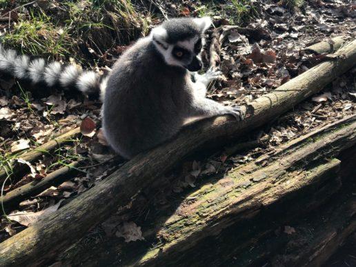 Dierenpark Amersfoort Poep & Zoo maki