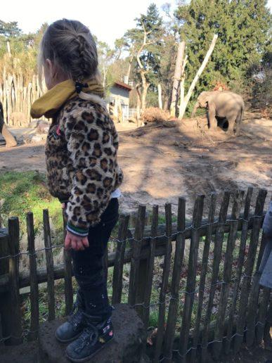Dierenpark Amersfoort Poep & Zoo bij de Olifanten