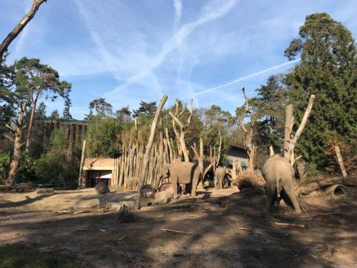 Dierenpark Amersfoort Poep & Zoo olifanten