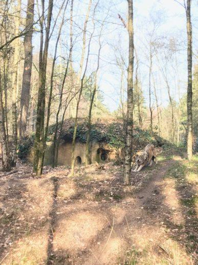 Dierenpark Amersfoort Poep & Zoo wolf