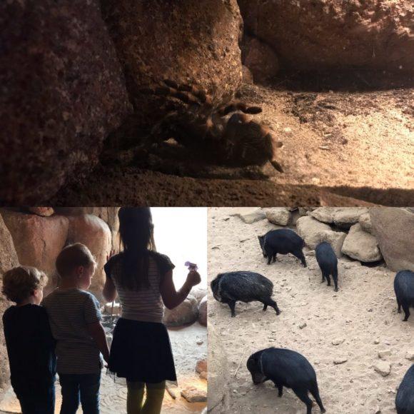 Burgers Zoo Desert woestijndieren