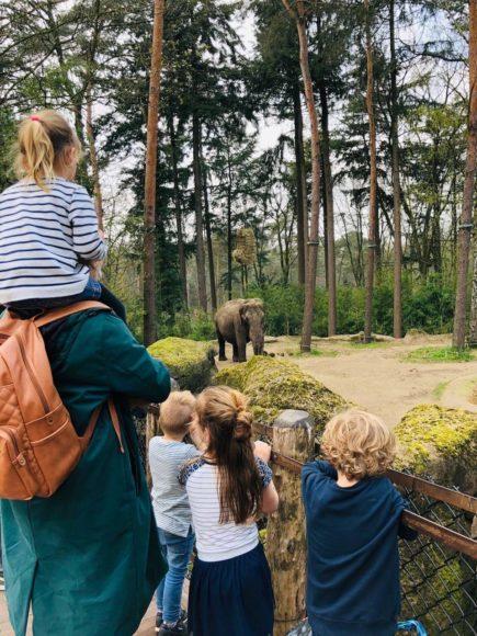 Burgers Zoo olifanten bejaardenhuis