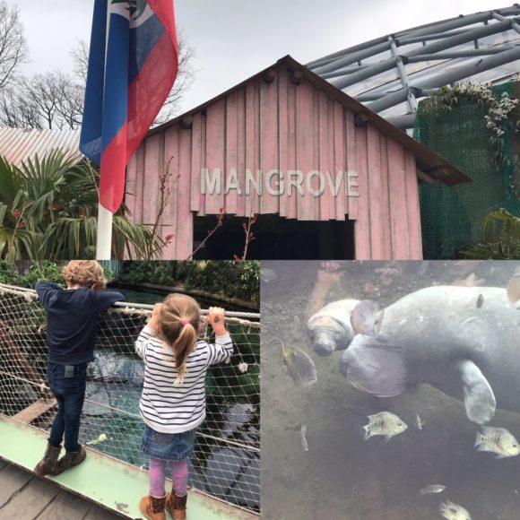 Burgers Zoo Mangrove baby zeekoe