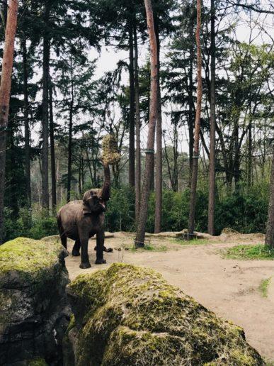 Burgers Zoo olifanten