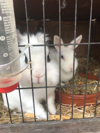 konijnen en kinderen