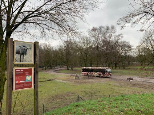 Safaripark beekse bergen bussafari