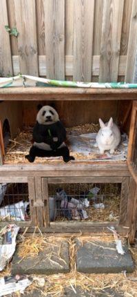 panda in het konijnenhok 3d weergeven
