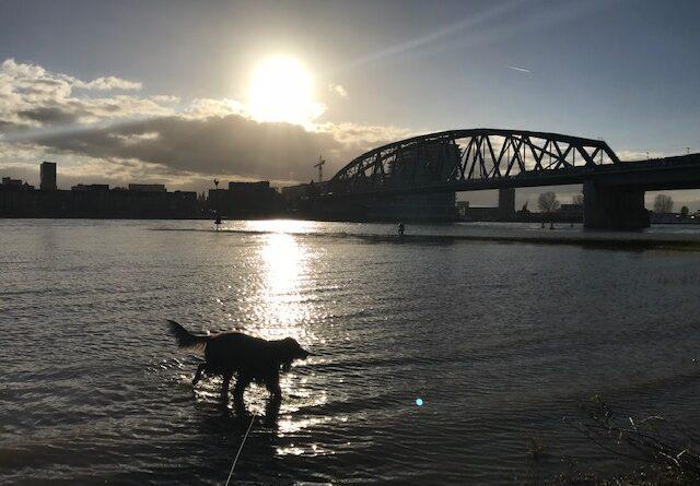 wandelen met de hond avondklok