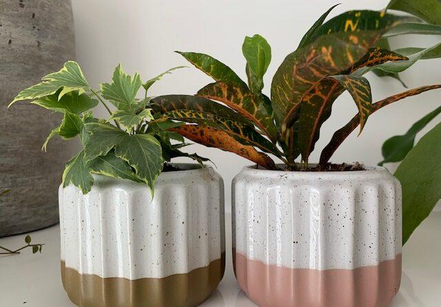 plant rebelz stekjes