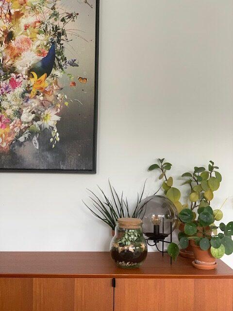 plant rebelz terrarium plantjes