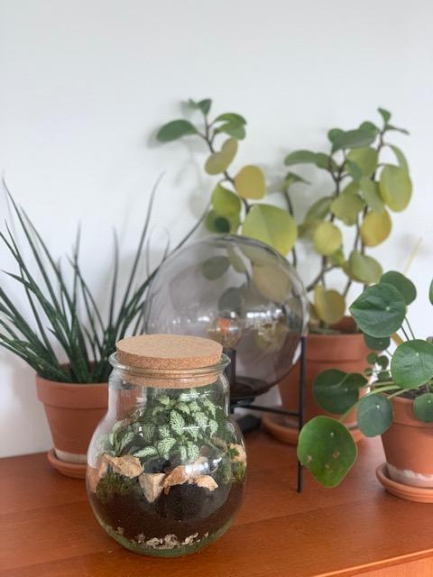 terrarium voor plantjes plant rebelz